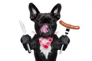 Was Hunde nicht fressen sollten